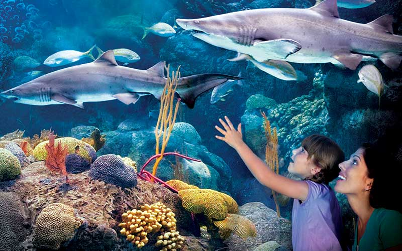 attractions offers mother and child at aquarium